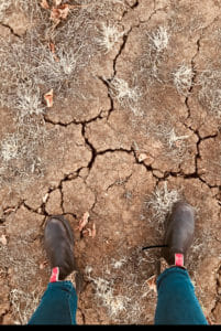 Plowman_Dry Grown Gound
